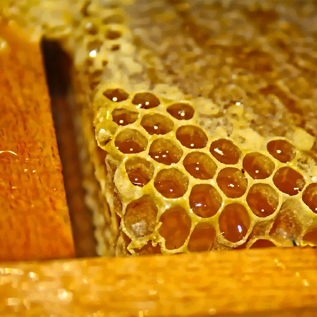 Honey #honey #instalike #instagram #tagsforlikes #followme #follow4follow #food #instafood #eat #foodporn #photo #sweet #yellow